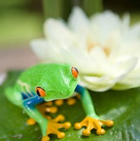 Six frogs on a lily pad – A parable for change
